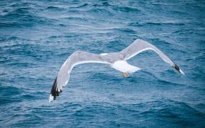 Картинка море, лето, тепло, птица, чайка