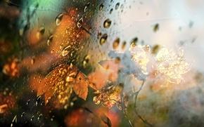 Картинка осень, стекло, листья, капли