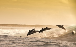 Картинка jumping, wave, dolphins, water splash, evening, sea, playful