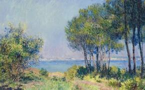 Картинка пейзаж, картина, Клод Моне, Пихты в Варанжевиле