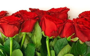 Обои цветы, букет, красные, природа, розы, цветок, листья, лепестки, бутоны