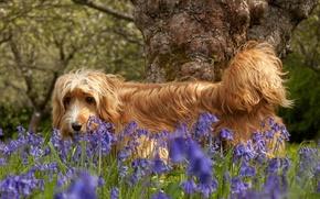Картинка цветы, природа, собака