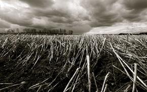 Обои поле, осень, трава, деревья, ветки