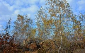 Картинка Небо, Осень, Деревья, Sky, Fall, Autumn, Colors, Trees