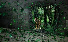 Обои тигр, листья, стена, дыра