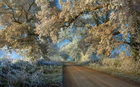 Обои иней, дорога, деревья, пейзаж