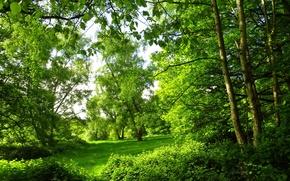 Картинка парк, природа, лето, фото, деревья, Лондон, лес