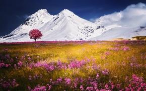 Картинка поле, снег, цветы, горы, природа
