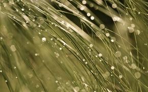 Картинка мокро, трава, макро, свет, блики