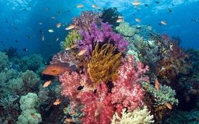 Обои море, рыбки, рыбы, кораллы, Подводный мир