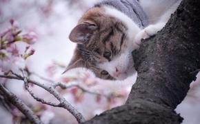 Обои усы, дерево, мордочка, природа, ветви, нос, кот