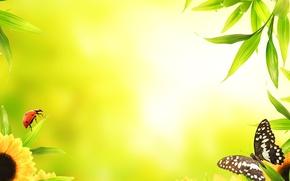 Картинка макро, цветы, бабочка, божья коровка, листики