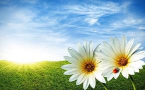 Картинка небо, трава, Цветы, облока