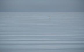 Обои озеро, птица, природа