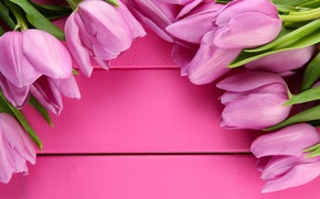 Картинка цветы, тюльпаны, fresh, pink, flowers, tulips, spring
