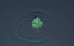 Картинка волны, лист, озеро