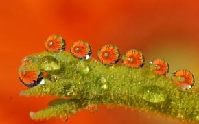 Обои мокро, вода, капли, макро, цветы, оранжевый, зеленый, Tamara Photography
