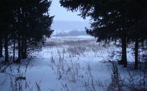 Обои деревья, снег, Зима