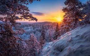 Обои зима, лес, снег, солнце