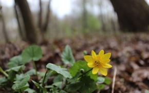 Картинка лес, цветок, желтый, зеленый, настроение
