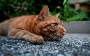 Картинка кот, лапы, рыжий, котэ
