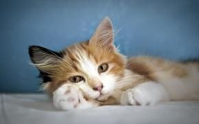Картинка кошка, взгляд, уют