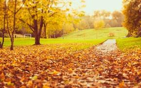 Картинка дорога, осень, трава, листья, деревья, природа, парк, газон, желтые, размытость, оранжевые