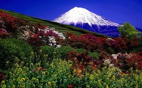 Картинка фото, Природа, Поле, Горы, Вулкан, Кусты, Пейзаж