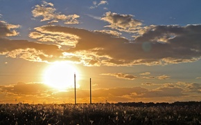 Картинка Закат, Солнце, Россия, Nature, Russia, Sunset, Роща, Grove