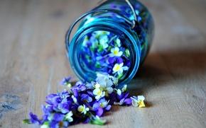 Картинка цветы, синий, голубой, лепестки, баночка