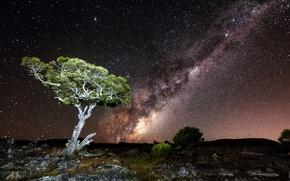 Картинка небо, звезды, свет, ночь, дерево, скалы