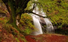 Картинка осень, лес, скалы, водопад, поток