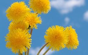 Картинка лето, небо, облака, цветы, желтое