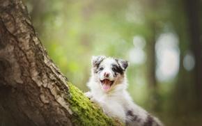 Картинка дерево, собака, щенок, Бордер-колли