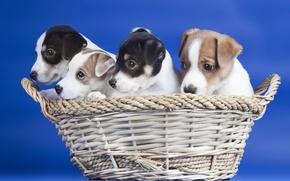 Картинка корзина, собаки, щенки