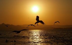 Обои море, солнце, волны, закат