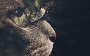 Картинка кот, морда, полет, фон, кошак, колибри, птичка, котяра