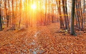 Картинка осень, лес, листья, деревья, листва, желтые, лучи солнца
