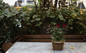 Картинка цветы, стол, роза