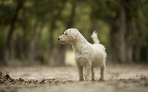 Картинка дорога, животное, собака