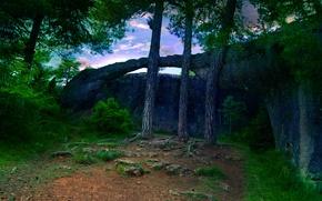 Картинка деревья, Лес, дорожка