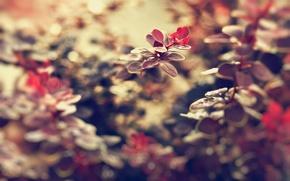 Картинка листья, макро, цветы, природа, фон, красивые, обои для рабочего стола