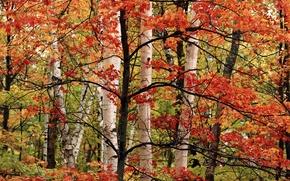 Картинка осень, дерево