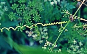 Картинка листья, природа, зеленый, растения, завиток