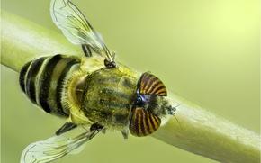 Картинка муха, насекомое, травинка
