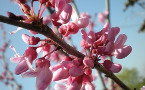 Обои небо, ветка, весна, розовый