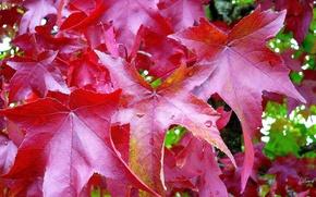 Картинка trees, leaves, fall, foliage
