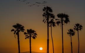 Картинка закат, птицы, пальмы, California
