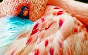 Обои перья, птица, обои, глаз, абстракция