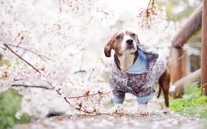 Картинка собака, взгляд, весна, друг